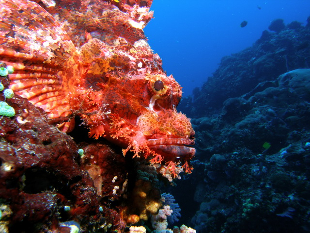 diving at Nusa Lembongan